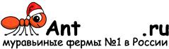 Муравьиные фермы AntFarms.ru - Чита